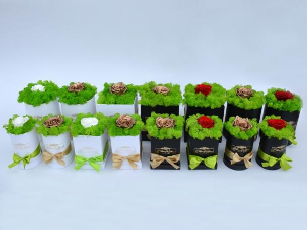 Örökrózsás zuzmóboxok (virágbox, virágdoboz)